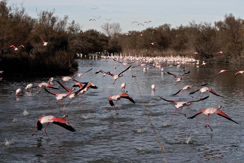 """""""Parc Ornithologique du Pont de Gau"""""""