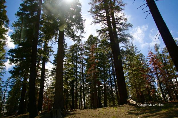 Boschi di pini lungo il percorso